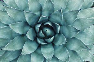 vce math flower golden ratio